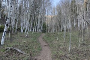Get Out! June hike of the month, Eider Creek to Deep Creek